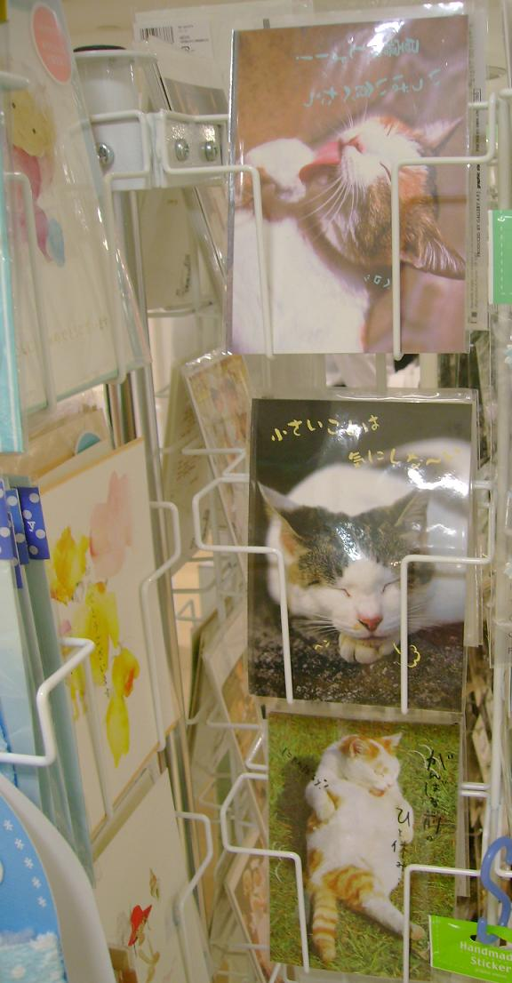 They has postcards of LOLcats? LOL! I haz sleepy face!