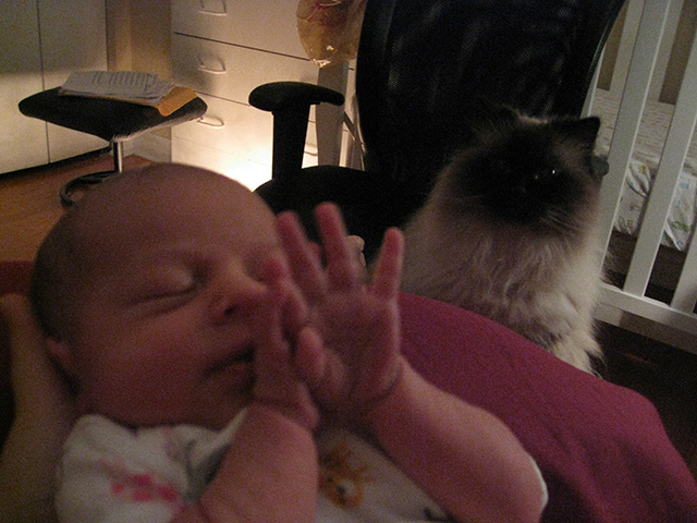 After she stopped pouting in the basement, kitty was fascinated by baby Blueberry and breastfeeding.