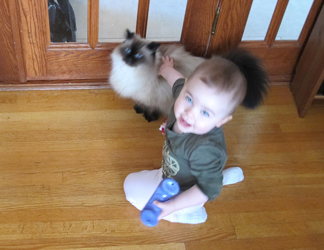 Even before she could properly focus, toddler Blueberry was very gentle with kitty and they were great friends.