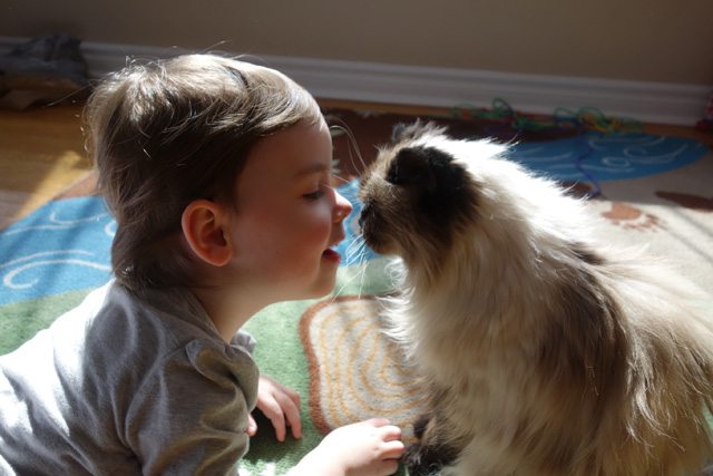 A fairly recent photo of toddler Blueberry and kitty giving nose kisses.