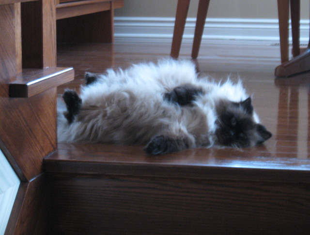 She liked to lounge upside-down like this on the floor. Only I may give her tummy-rubs though -- all others will get teeth. That's the kind of special relationship we had.