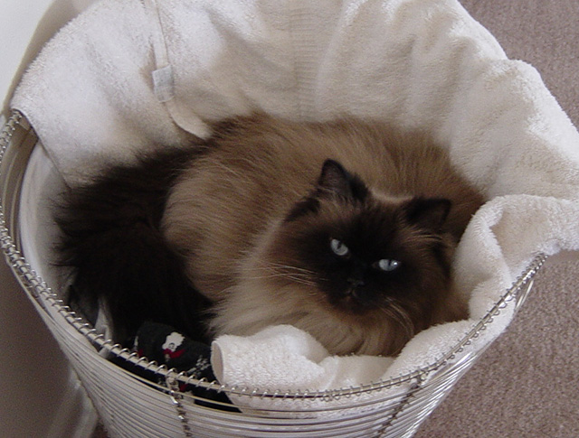 She really liked sleeping in my laundry. And really hated it if she jumped into the hamper and it was empty.