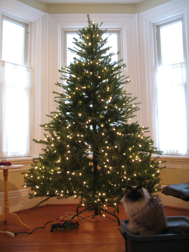 Xmas tree set-up in London (incidentally, this was the first xmas Wayfare and I had together after getting married). Kitty was there with me for most of my life's big events.