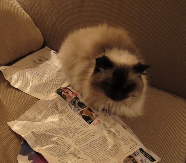 Portfolio manager cat reviewing research material.